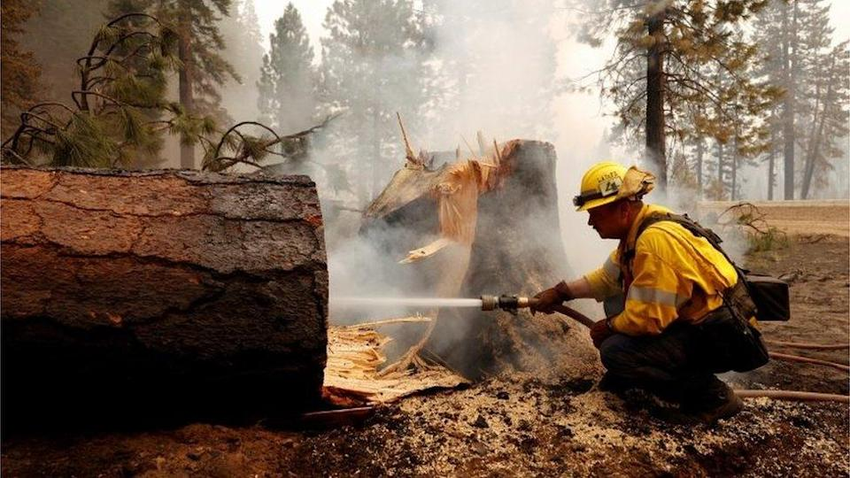 A firefighter extinguishes a fire in the base of a tree that was cut down while fighting the Dixie Fire