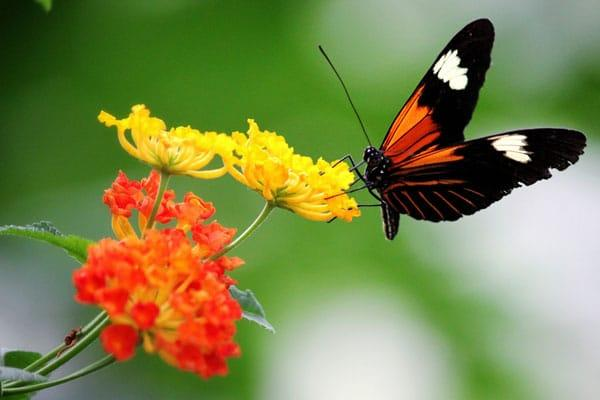 Start Planning Your Butterfly Garden Now: Butterfly on Flower