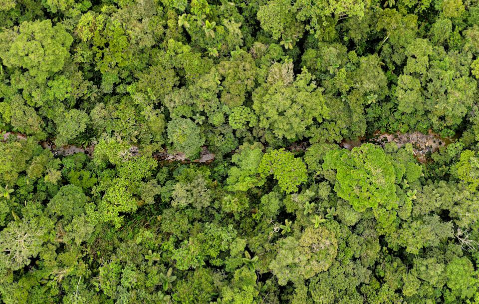 Aerial panorama, a stream running through the canopy from a tropical forest
