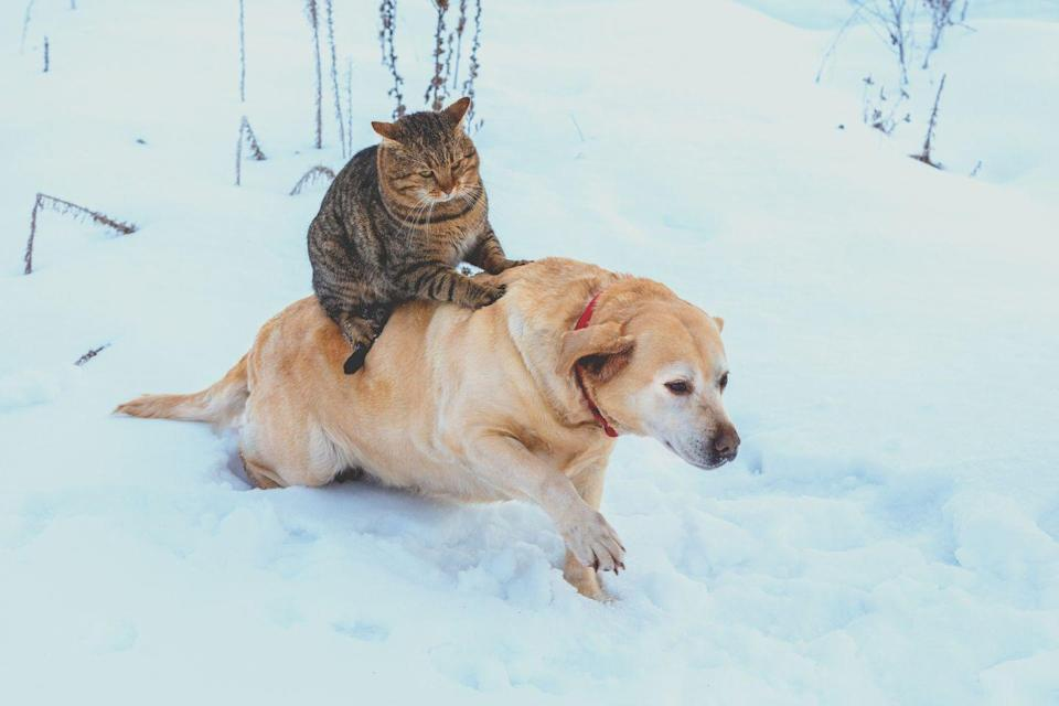 <p>A cat playing with a dog? A cat peacefully sitting on a dog?? A cat sitting on a dog outside in the snow?!?! It's hilarious and adorable all at once. </p>