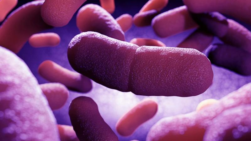 Dog Infects Humans With Plague for First Time in US