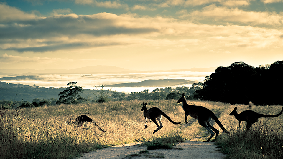 It is unclear whether kangaroo meat is of concern to Agriculture Victoria. Source: Getty