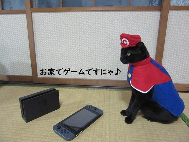 Cat cosplayer from Japan, Chocola, whose owner has hand-made 114 costumes for it, as Super Mario. (Photo: Twitter/@kigurumicyokor1)