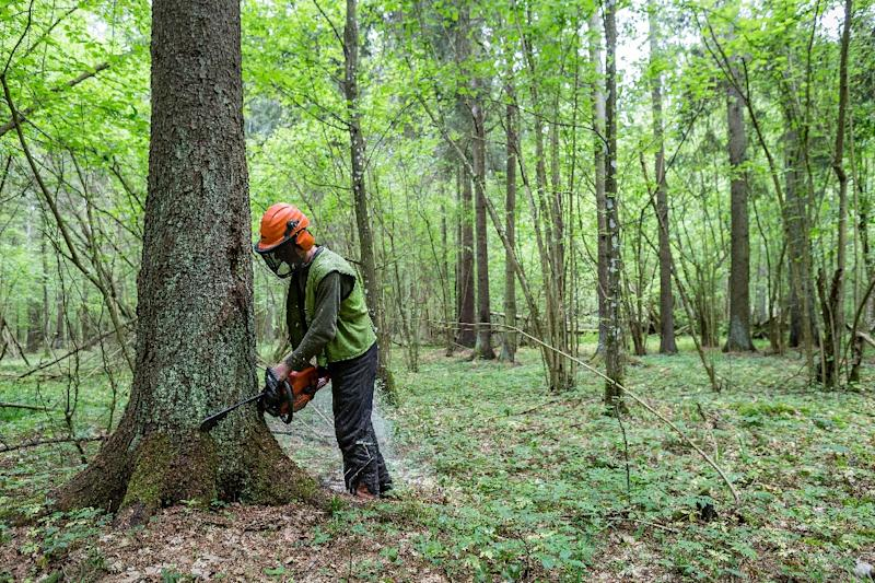 The European Commission last week warned Poland to obey the comply or see the logging issue added to a broader EU case against Warsaw over democratic standards