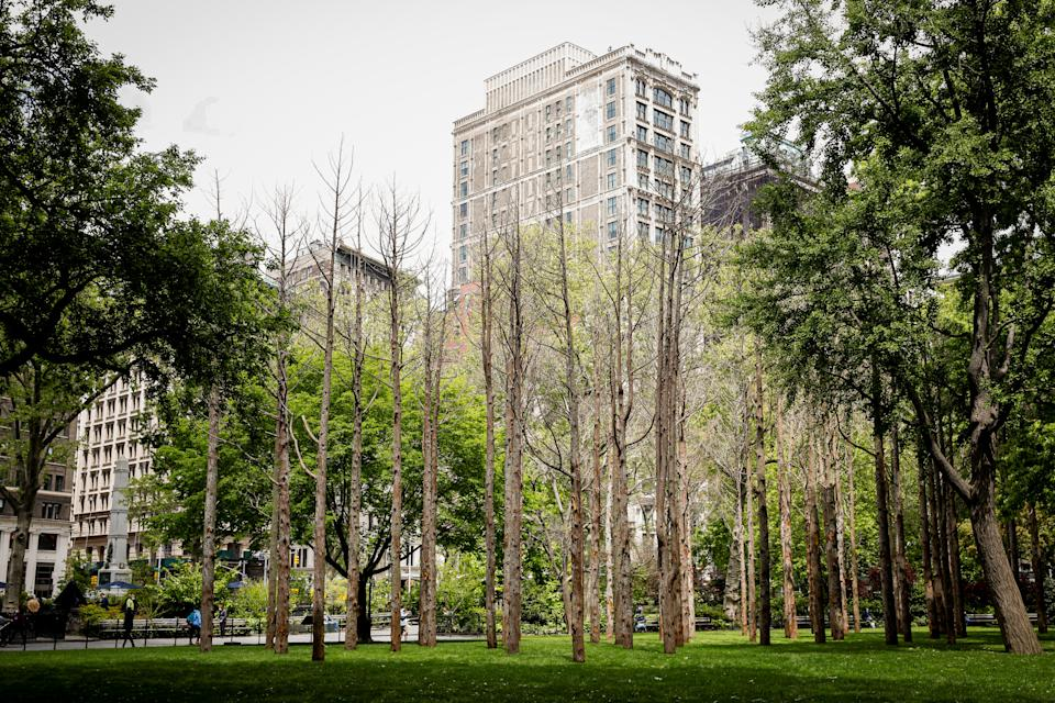 """""""Ghost Forest"""" an art installation designed by artist Maya Lin is seen in Madison Square Park in the Manhattan borough of New York City May 10, 2021. REUTERS/Brendan McDermid"""