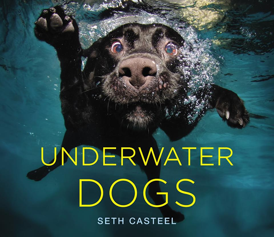 """A collection of 80 of Seth Casteel's underwater dog portraits have been turned into a new picture book, """"Underwater Dogs."""" The photos show a hilarious and primal side of dogs you haven't seen before. """"I'm interested in photographing dogs in their element,"""" Casteel said. """"I want them to be themselves... It all has to do with emotion and expression."""""""