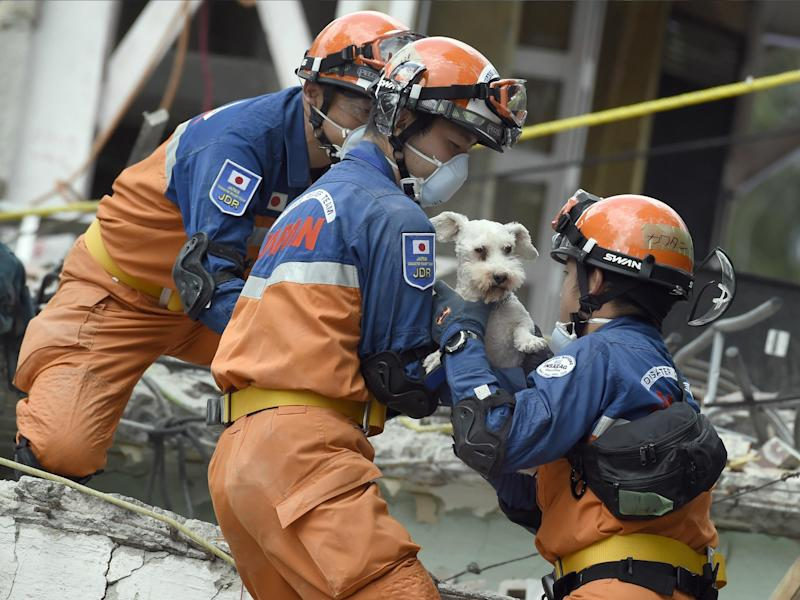 A schnauzer dog who survived the quake is pulled out of the rubble from a flattened building by rescuers in Mexico City 24 September: ALFREDO ESTRELLA/AFP/Getty Images