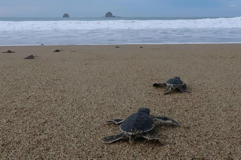The shores of Mera Batiri National Park in Indonesia are nesting grounds for several species of turtle