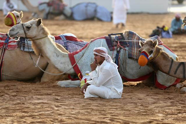 DUBAI, UNITED ARAB EMIRATES - APRIL 16: A handler waits to race prior to the start of Al Marmoom Heritage Festival at the Al Marmoom Camel Racetrack on April 16, 2014 in Dubai, United Arab Emirates. The festival promotes the traditional sport of camel racing within the region. (Photo by Francois Nel/Getty Images)