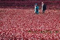 """<p>The Queen and Prince Philip visit the Tower of London's 'Blood Swept Lands and Seas of Red' <a href=""""https://www.goodhousekeeping.com/uk/lifestyle/a24875602/emma-bridgewater-poppy-mug-royal-british-legion/"""" rel=""""nofollow noopener"""" target=""""_blank"""" data-ylk=""""slk:poppy"""" class=""""link rapid-noclick-resp"""">poppy</a> installation in 2014. The art installation symbolised British and Colonial military fatalities in WWI.</p>"""