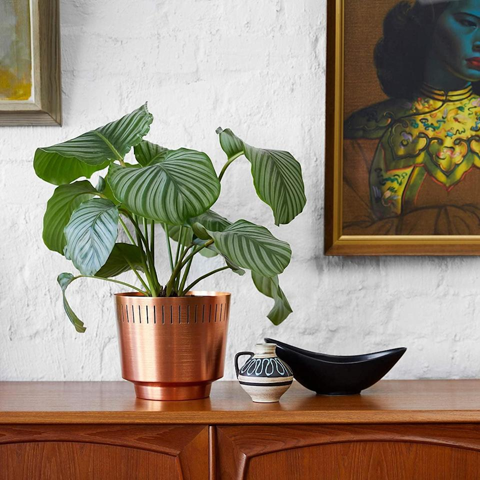 <p>You might like the polished look of this <span>Modn Lovr Planter Pot</span> ($43).</p>