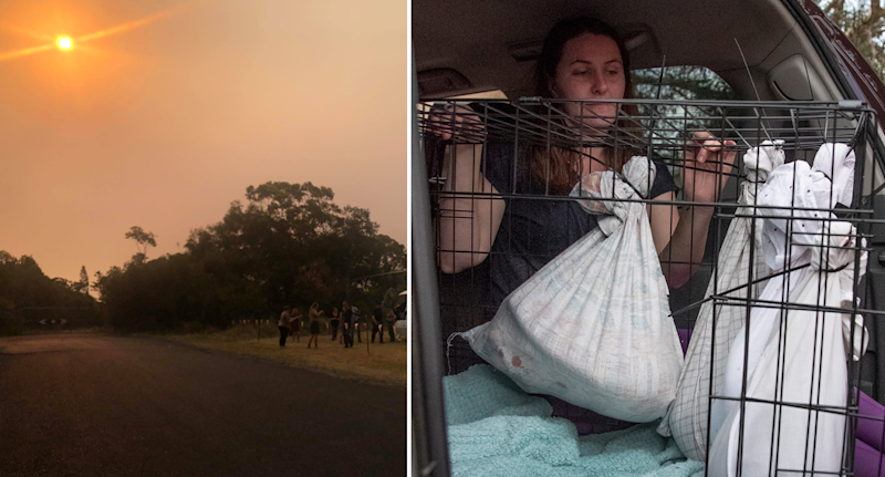 The smokey skyline as NSW bushfires burned is seen on the left, while a volunteer sees to a cage of animals in a car on the right.