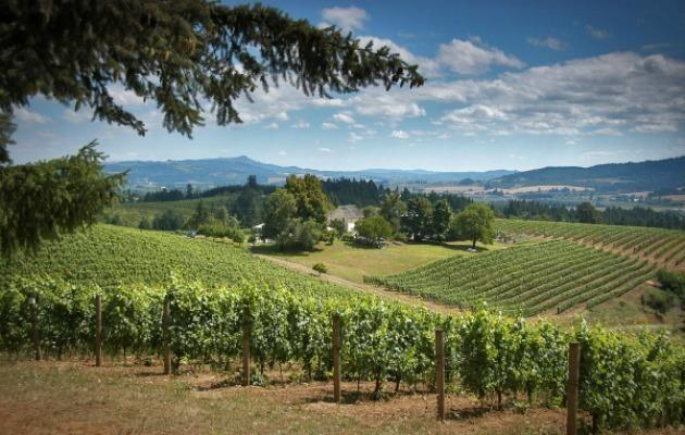 Picturesque David Hill Winery in the Tualatin Valley outside Portland Oregon.