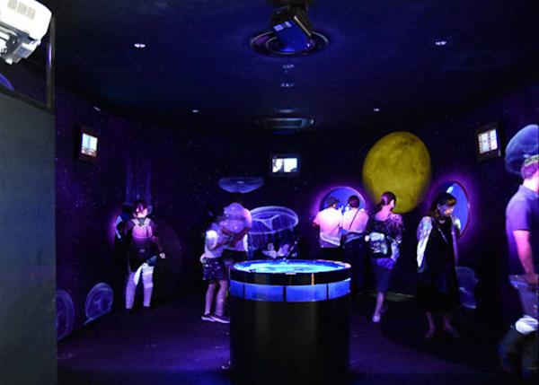 ▲ Beyond that are displays of live jellyfish. LED images of jellyfish dancing are also projected on the walls.