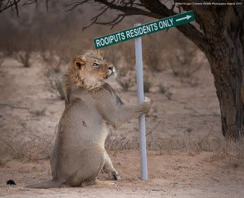 """""""Excuse me, sir, do you need help with directions?"""""""
