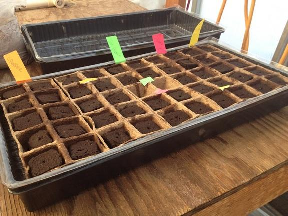 One task of crews at Utah's Mars Desert Research Station is to plant and maintain crops for other crews to eat. The Mars Society believes this is a task that crews on the Red Planet would do as well.