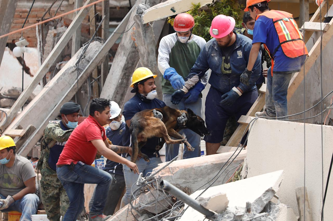 <p>A dog is held by a rescue worker during the search for students at Enrique Rebsamen school after an earthquake in Mexico City, Mexico, Sept. 20, 2017. (Photo: Edgard Garrido/Reuters) </p>