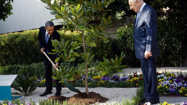 Tree Obama Planted in Jerusalem May Be Uprooted for Inspection