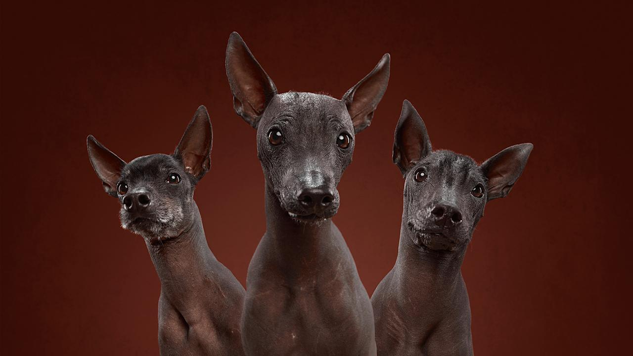 <p>These adorable portraits look to show the wide-ranging personalities of a variety of canines, capturing their incredible diverseness through their expressions and finite details. (Photo: Alexander Khokhlov-Veronica Ershova/Caters News) </p>