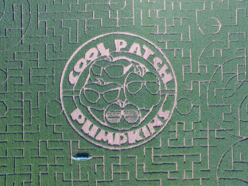 cool patch pumpkins corn maze has its name spelled out and surrounding with sunglasses
