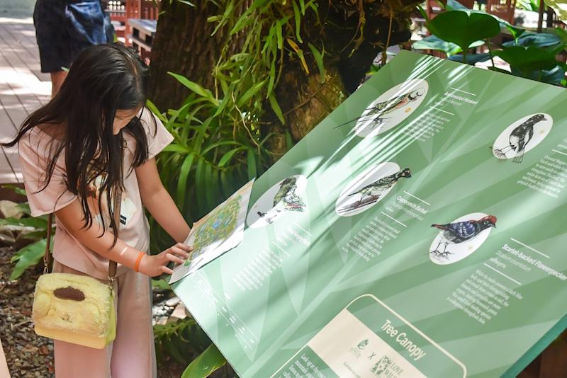 A child partakes in a scavenger hunt where resort guests can learn about wildlife species. Photo: Coconuts