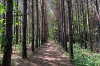 A trail though a forest, which is planned for development of Piedmont Lithium's mine, is seen in Gaston County