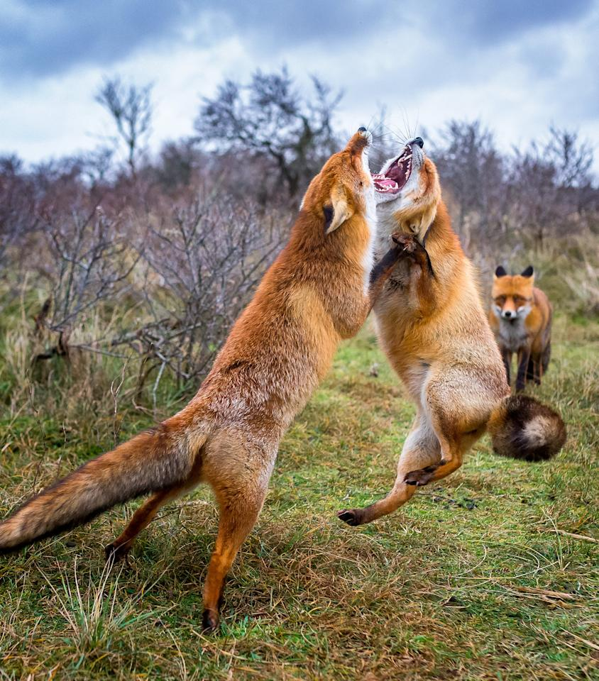 <p>Ossi said: 'I think they are very beautiful animals and their behaviour and life is interesting, however they are also very challenging subject.' (SWNS) </p>