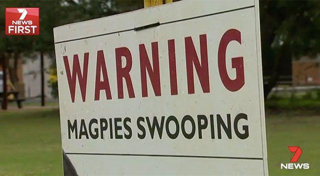 A Whiteman Park spokesperson said there were warning signs about magpies swooping. Source: 7 News