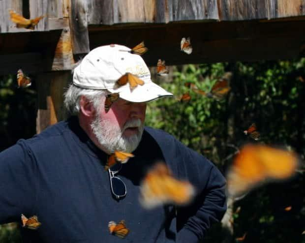 Chip Taylor, the director of Monarch Watch, says he doesn't find it surprising to see the population of the monarch butterfly decline.  (Submitted by Chip Taylor - image credit)
