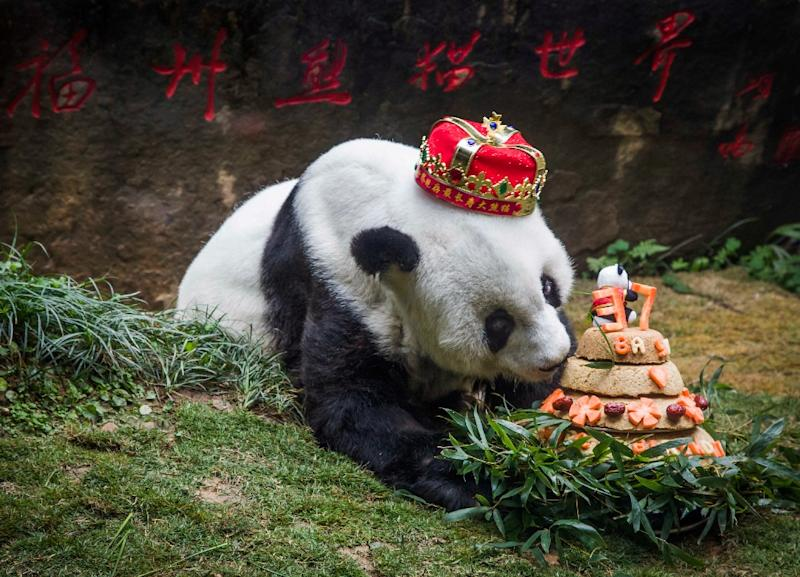 Giant panda Basi was something of a beloved star in China and her birthdays were often celebrated with gusto (AFP Photo/STR)