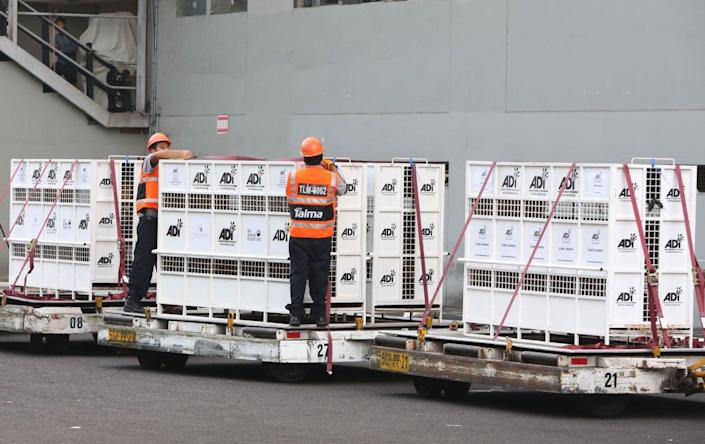 <p>Workers strap down cages that hold former circus lions being transported to South Africa, at the port in Callao, Peru, April 29, 2016. <i>(Martin Mejia/AP)</i></p>