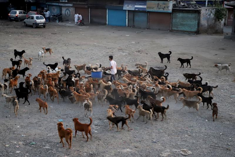 A man feeds stray dogs during Covid-19 (Coronavirus) pandemic in Sopore town of district baramulla Jammu and Kashmir, India on 30 June 2020 (Photo by Nasir Kachroo/NurPhoto via Getty Images)