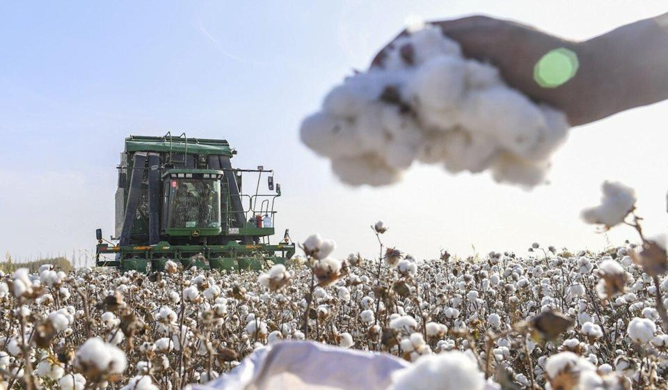 """Xinjiang cotton is """"pure white and flawless"""", according to China's commerce ministry. Photo: Xinhua"""
