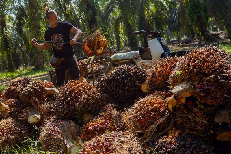 Onn Hafiz said the low market prices from palm oil and rubber yield has affected the rural community who are dependent on the commodities to make a living. — Picture by Mukhriz Hazim