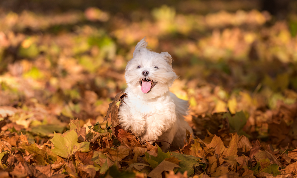 Tackle pet haircuts on your own. (Photo: Canva)