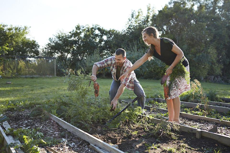 """<p>Gardening isn't just for the spring or summer. Lean in to the season's crisp weather by planting everything from carrots to broccoli. </p><p><strong>RELATED: </strong><a href=""""https://www.goodhousekeeping.com/home/gardening/a20707312/how-to-plant-fall-garden/"""" rel=""""nofollow noopener"""" target=""""_blank"""" data-ylk=""""slk:How to Plant a Fall Garden"""" class=""""link rapid-noclick-resp"""">How to Plant a Fall Garden</a></p>"""