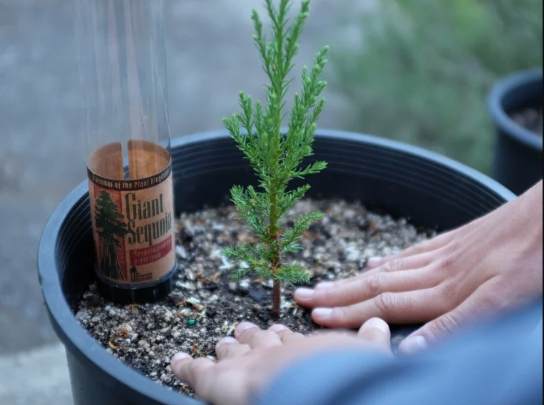"""<h2>The Jonsteen Company Grow-a-Tree Kit</h2><br>If your best pal is lucky enough to have a shred of outdoor space, they may enjoy cultivating their very own tree — even if it's just on a fire escape. The Grommet offers mighty options like sequoias and redwoods, along with a selection of evergreen trees — but don't worry, they all start small.<br><br>Shop <strong><em><a href=""""https://www.thegrommet.com/"""" rel=""""nofollow noopener"""" target=""""_blank"""" data-ylk=""""slk:The Grommet"""" class=""""link rapid-noclick-resp"""">The Grommet</a></em></strong><br><br><strong>The Jonsteen Company</strong> Grow-a-Tree Kit, $, available at <a href=""""https://go.skimresources.com/?id=30283X879131&url=https%3A%2F%2Fwww.thegrommet.com%2Fproducts%2Fthe-jonsteen-company-grow-a-tree-kit"""" rel=""""nofollow noopener"""" target=""""_blank"""" data-ylk=""""slk:The Grommet"""" class=""""link rapid-noclick-resp"""">The Grommet</a>"""