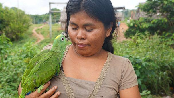 PHOTO: A Kakataibo woman and her pet bird in Peru's Ucayali region. Over 30 million people, including scores of indigenous tribes, rely on the forests and rivers of the Amazon rainforest. (Neil Giardino/ABC News)