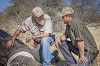 "<p>In 2015, Prince Harry <a href=""https://people.com/royals/prince-harry-gets-emotional-as-he-sees-rhinos-slaughtered-for-their-horns/"" rel=""nofollow noopener"" target=""_blank"" data-ylk=""slk:spent three months"" class=""link rapid-noclick-resp"">spent three months</a> during the summer on a tour through four southern African countries as he worked alongside rangers <a href=""https://www.people.com/people/package/article/0,,20395222_20934049,00.html"" rel=""nofollow noopener"" target=""_blank"" data-ylk=""slk:and veterinarians"" class=""link rapid-noclick-resp"">and veterinarians</a> and took part in expeditions to <a href=""https://www.people.com/people/package/article/0,,20395222_20940157,00.html"" rel=""nofollow noopener"" target=""_blank"" data-ylk=""slk:de-horn rhinos"" class=""link rapid-noclick-resp"">de-horn rhinos</a> in the fight against poaching.</p> <p>He spoke about the statistics behind the graphic killings and animal trade, saying, ""the numbers of rhinos poached in South Africa has grown by nearly 500 percent in just five years, with most of these occurring in Kruger [Nationa Park]. Already this year, 1,500 rhinos have been killed in this country.""</p> <p>He added, ""If current poaching rates continue there will be no wild African elephants or rhinos left by the time children born this year, like my niece, Charlotte, turn 25. If we let this happen, the impact on the long-term prosperity of this country and on the natural heritage of the planet will be enormous and irreversible.""</p>"