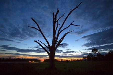 An oak tree that has lost all its leaves and most of its branches from a tornado is pictured at sunset near Vilonia, Arkansas