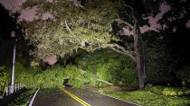 Fallen trees block Front Street on Wednesday, July 7, 2021 in Valrico. Tropical Storm Elsa continued to track north after dropping heavy rain in the Tampa Bay area. (Luis Santana/Tampa Bay Times via AP)