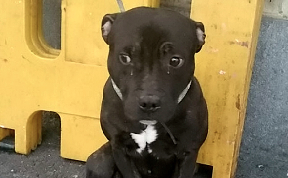 Dog abandoned tied to railings at Eastbourne Railway Station