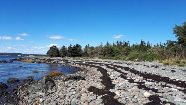 The Nature Trust of New Brunswick recently acquired 372 hectares on Ross Island at Grand Manan, named the Keiko and Errol Nature Preserve. (Submitted by the Nature Trust of New Brunswick - image credit)