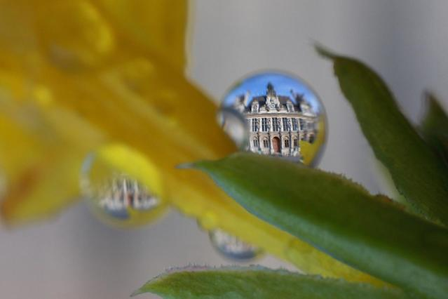 "<p>""Tears of Paris"" from plants and stems. Here the Hôtel de Ville is shown. (Photo: Bertrand Kulik / Caters News) </p>"