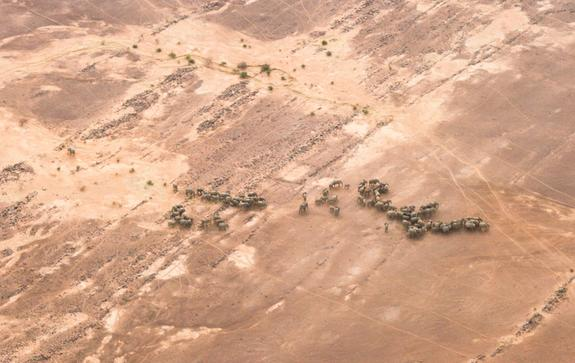 The 350 elephants living in Mali's Gourma desert – Africa's northernmost population – have adapted to living with little access to water and high temperatures.