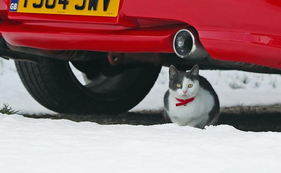 A cat shelters under a car from the snow in Stalybridge, Greater Manchester.