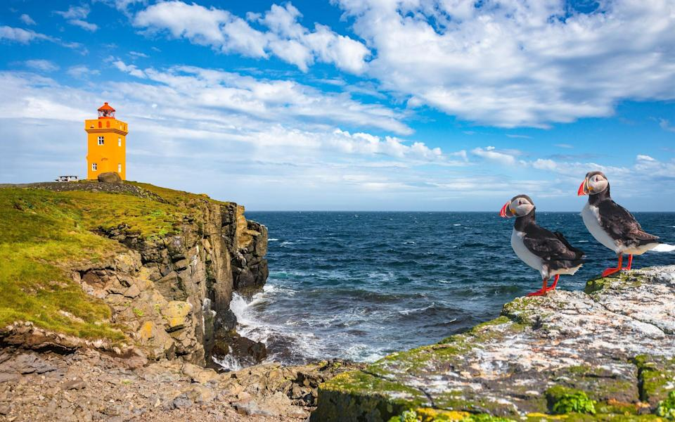 Head to Grimsey, a puffin haven straddling the Arctic Circle - Getty