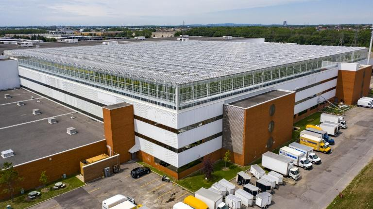 World's biggest rooftop greenhouse opens in Montreal