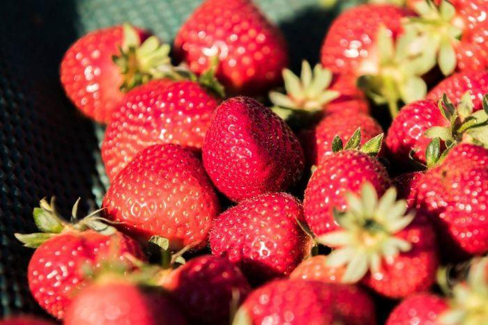 Close up of bright red, glossy strawberries