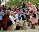 <p>Queen Elizabeth is delighted to see that several royal fans have brought their corgis to meet her.</p>